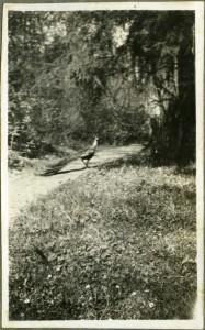 Fotografia ze zbiorów pani Heleny Chądzyńskiej