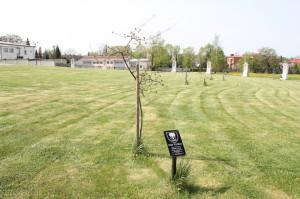 Górski Kazimierz
